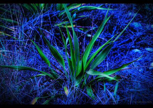 blue green poem haiku surreal dri hdr yucca photomatix oscote