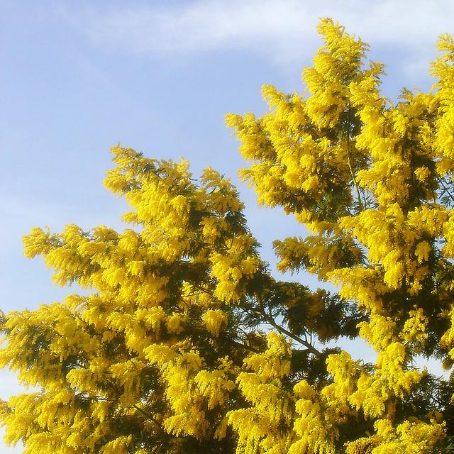 Lalbero Del Solebuona Giornata Dell8 Marzo The Sun T