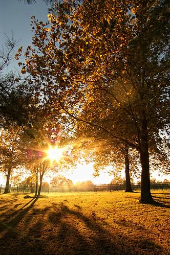 autumn trees sunset sun fall landscape shadows pentax sunburst shining starburst k100dsuper