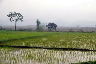 beautiful rice paddies, luang nam tha | by hopemeng