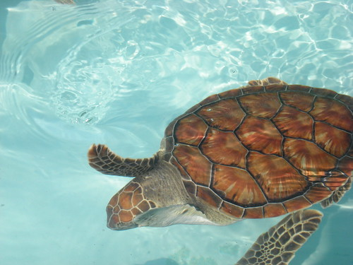 At the Turtle Farm | by dawn =^..^=