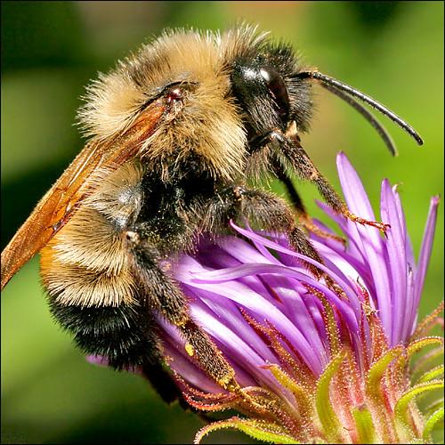 ~ Bee Vibrant ~   by ViaMoi