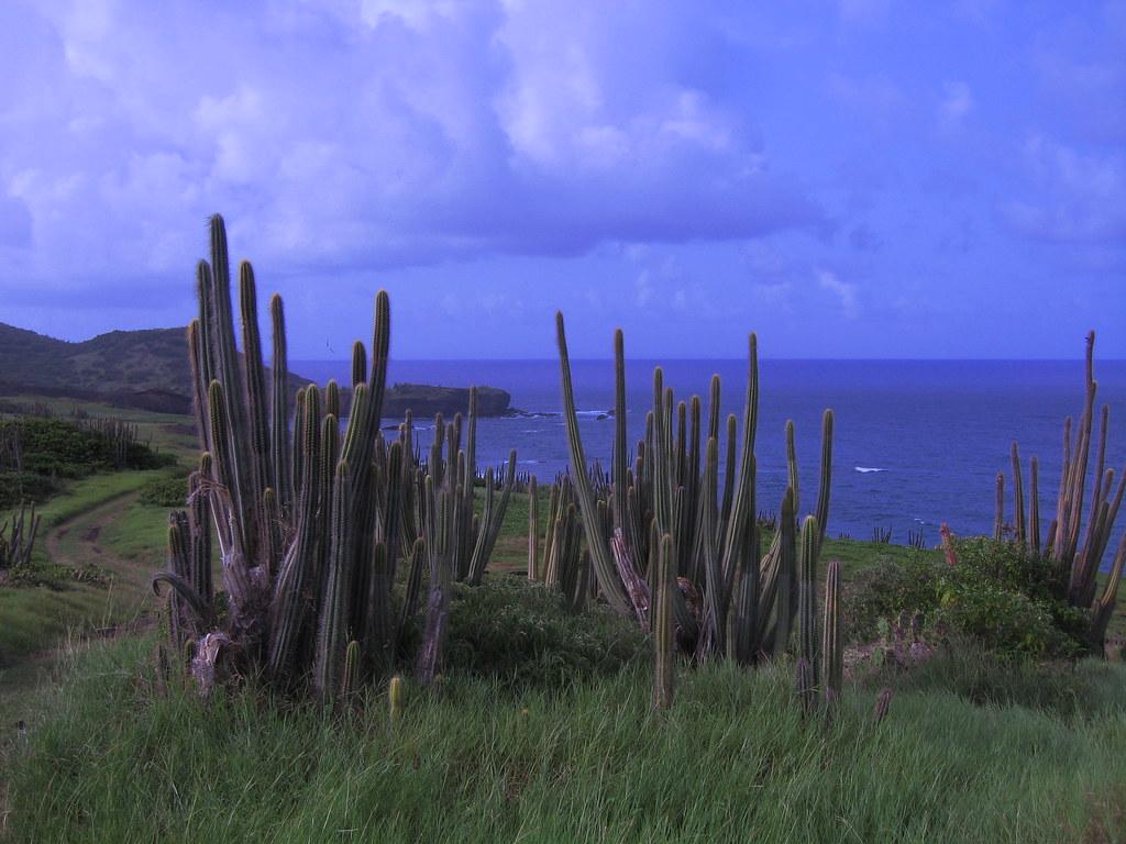 Cactus Valley auf St. Lucia | Markus Welter | Flickr