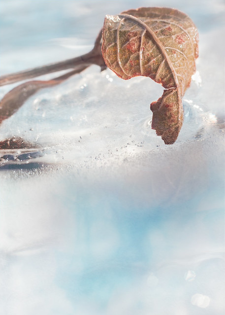 Lure of the Frozen Shore
