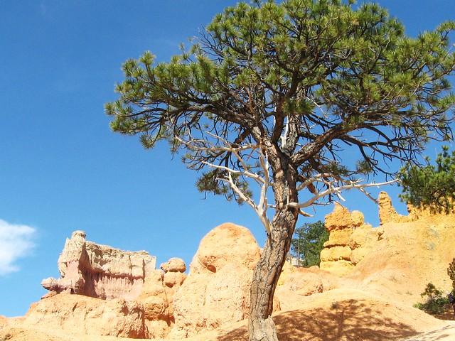 Hoo Doos at Bryce Canyon