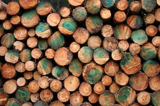 Logs   by Neil T