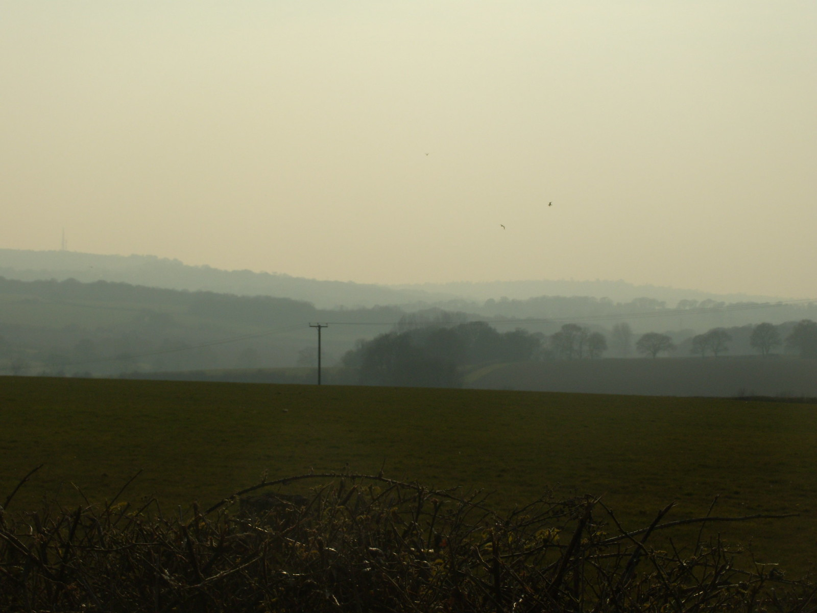 Misty landscape Rye Circular