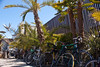 05708 Bikes lined up in the shade of the palms by geekstinkbreath