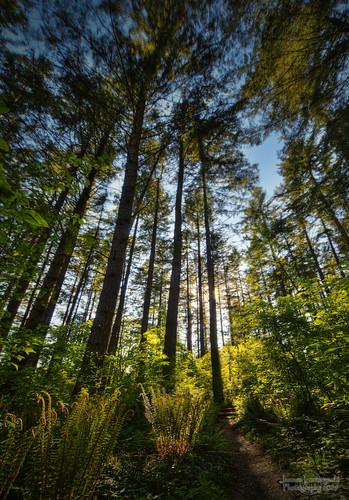 forest geotagged bravo walk ferns langley hdr 219 sigma1224 janusz leszczynski campbellvalleypark infinestyle geo:lat=49025037 onthenarrowpath geo:lon=122652311