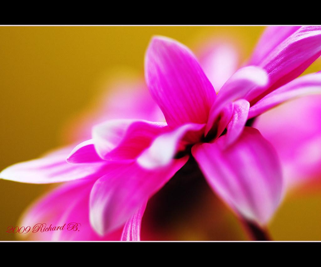 Bonne Fête Petite Soeur Richard Beaulieu Flickr