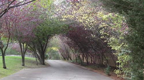 canopy driveway Monterey