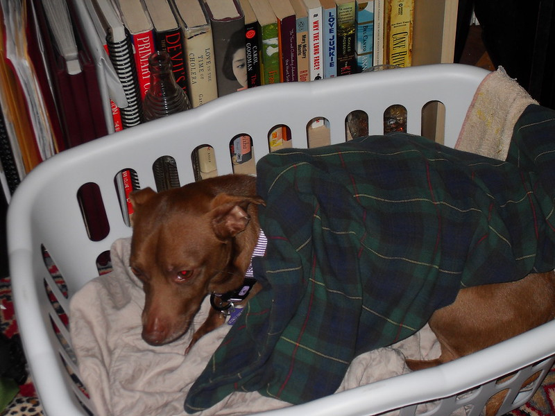 Max in a basket