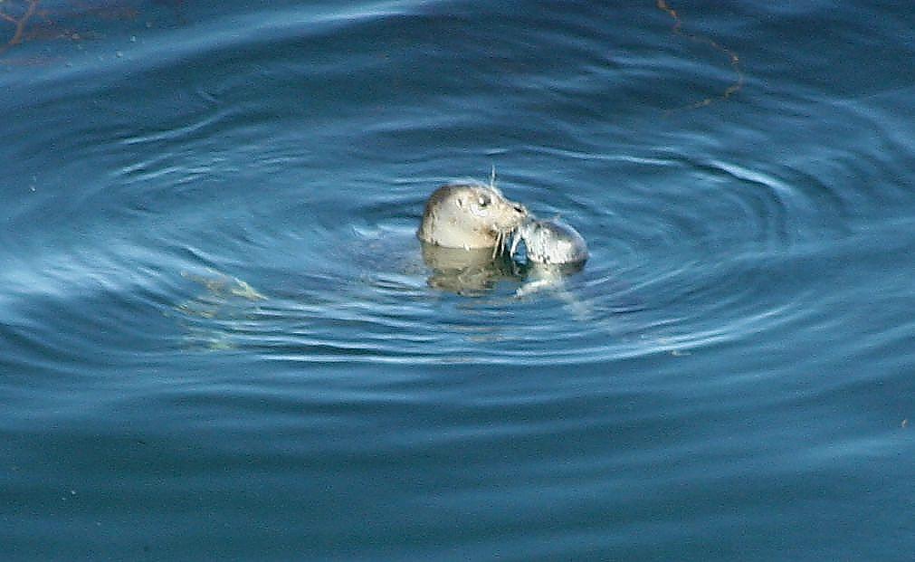 Seal Pup Kiss