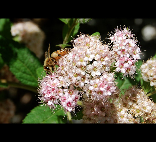 flowers nature georgia spring blossoms honeybee