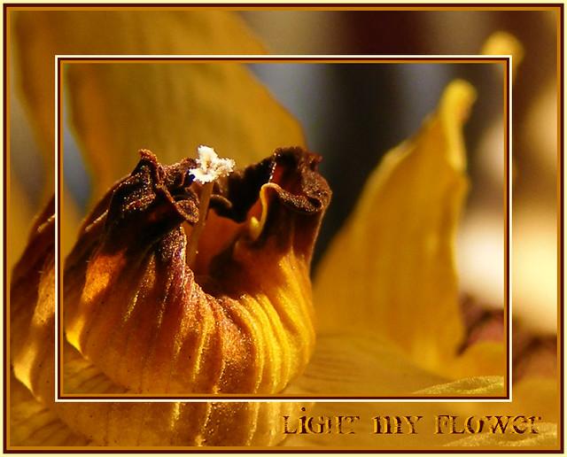 light my flower . . .