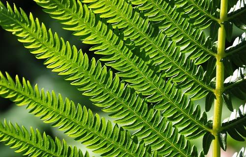 light shadow sunlight fern green leaves bright backlit parallel fronds backlitleaves