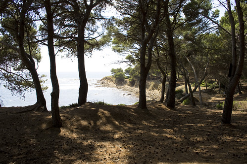 Sea view and cliffs from the pine-wood in Punta Licosa | by odieresis