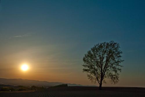 sunset tree japan hokkaido biei 美瑛 哲学の木 nikond3