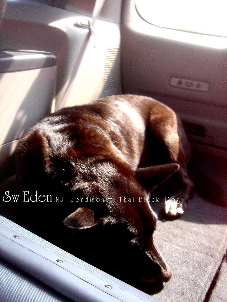 หมานอนเบาะรถยนต์หลังรถ