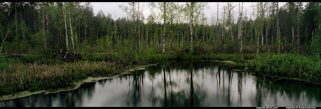 Russian bog | Владимирская область Vladimir Region, Russia s