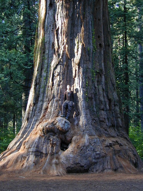 Park Big Tree