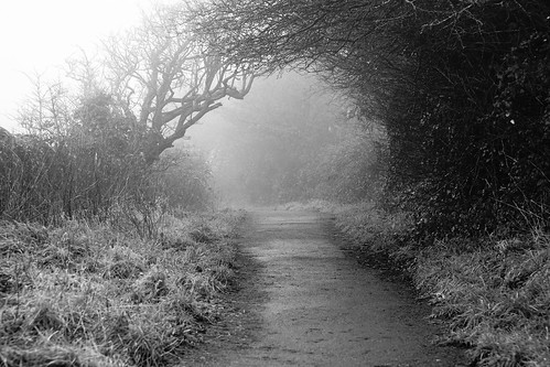 clevedon northsomerset outdoors winter arch blackandwhite blackwhite monochrome nature sony a6000 trees path landscape mist bw uk