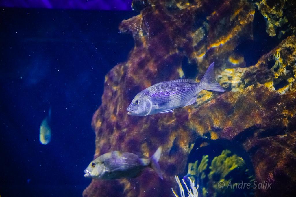 L'Aquàrium de Barcelona. 15:34:40  DSC_7988