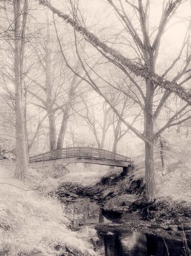 bridge trees backlight forest landscape northcarolina infrared hie