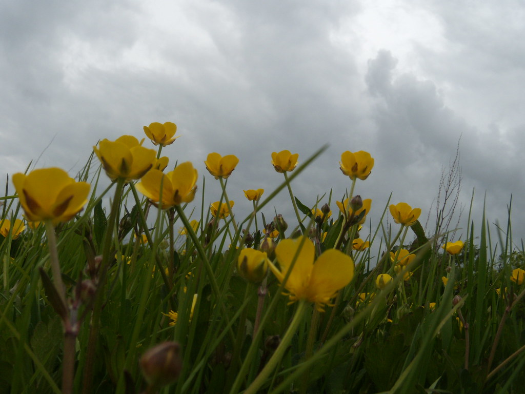 Buttercups Southbourne to Chichester