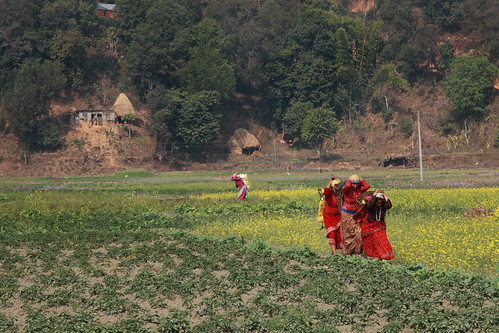 Women carry bundles on their backs through a field | by World Bank Photo Collection