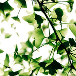 14271 : Green Butterfly in the air