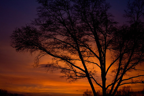sunset tree dusk silouhette croweshots
