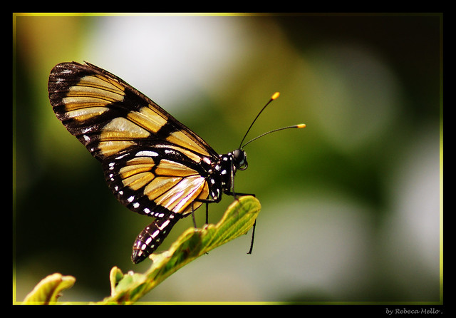 My first butterfly ...