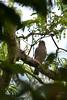 Tiny Hawk by chlorophonia