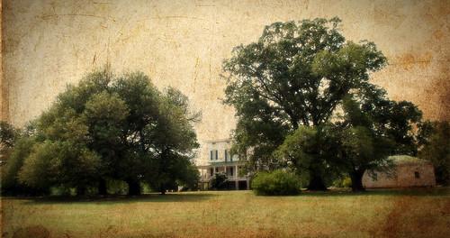 house tree field oak southern plantation redcliffe