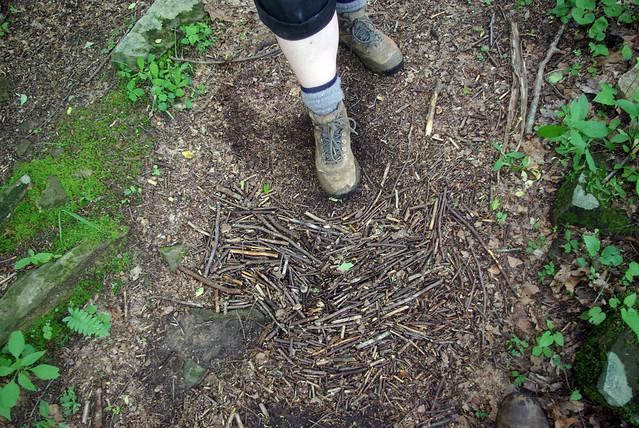 The Orderly Deposition of Organic Debris, Angel Falls Trail, Big South Fork NRRA, Scott Co, TN