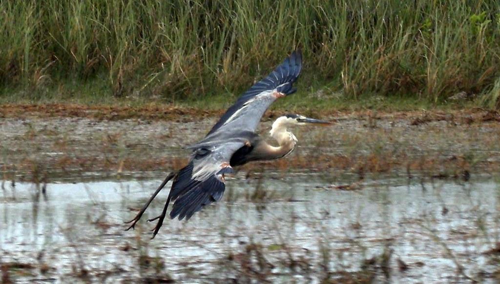 Bird in the Everglades