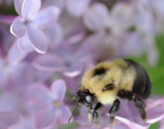 ~Hope is the only bee that makes honey without flowers~