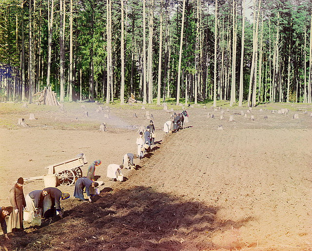 Monks at work. Sowing potatoes. 1910