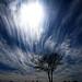 Blue, Clouds, Tree by MattGerlachPhotography