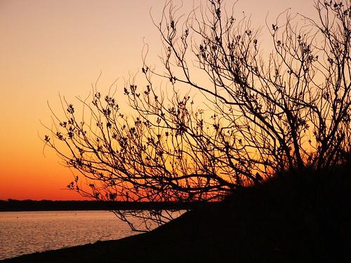 lake sunrise lakelewisville