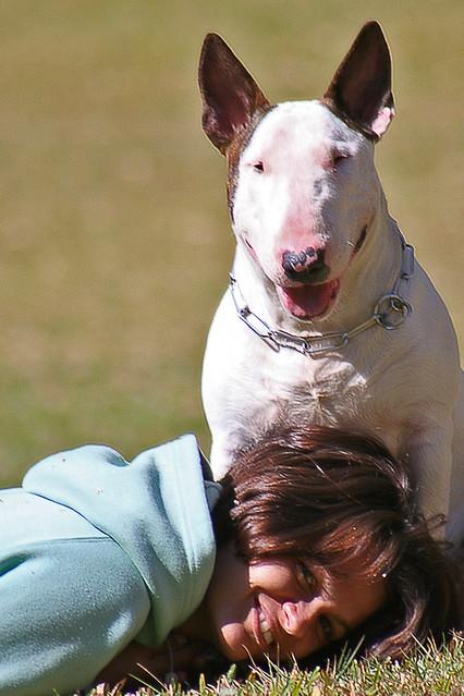 Felicidade, Bull Terrier