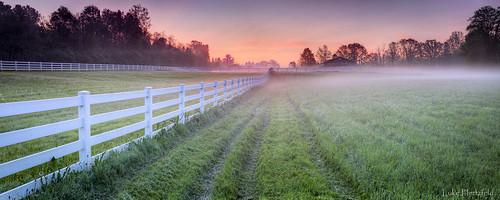 trees ohio horses grass fog rural sunrise fence outdoors dawn farm tracks pasture stable whitehouseohio