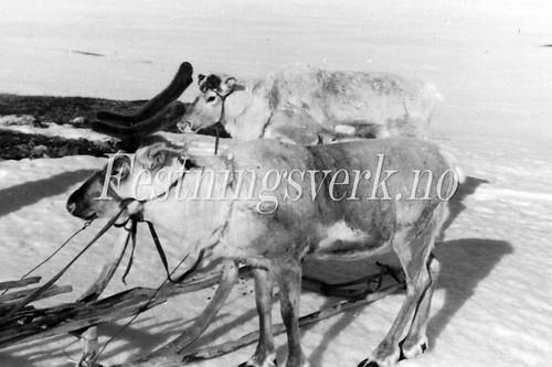 Finnmark 1940-1945 (399)