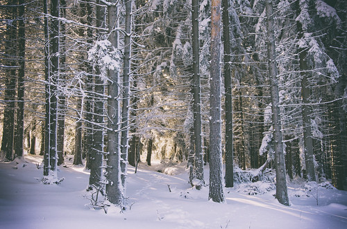 winter wintertime woods wood tree trees forest forests beautiful beauty beautifulday sun sunshine sunny sunset light lights twilight snow snowing snowy snowfall mountain mountains ice cold cool love lovely landscape landmark landscapes natural nature