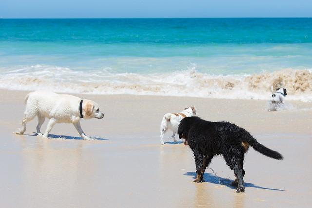361/366 Dog meets beach
