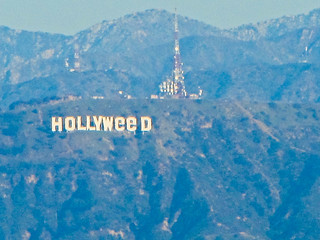 Hollyweed | by Bolt of Blue