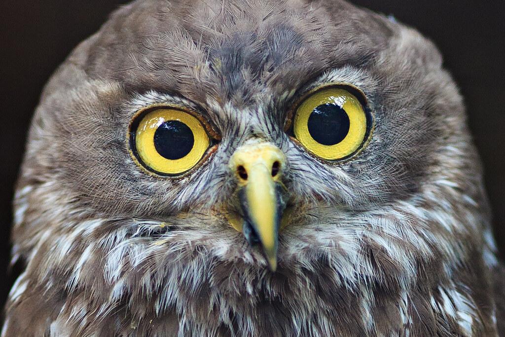 Image: Those Eyes