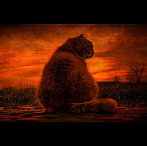 street sunset orange sun grass cat garden landscape soleil chat jardin cobblestones textures caramel paysage rue roux coucherdesoleil herbe pavés abigfave