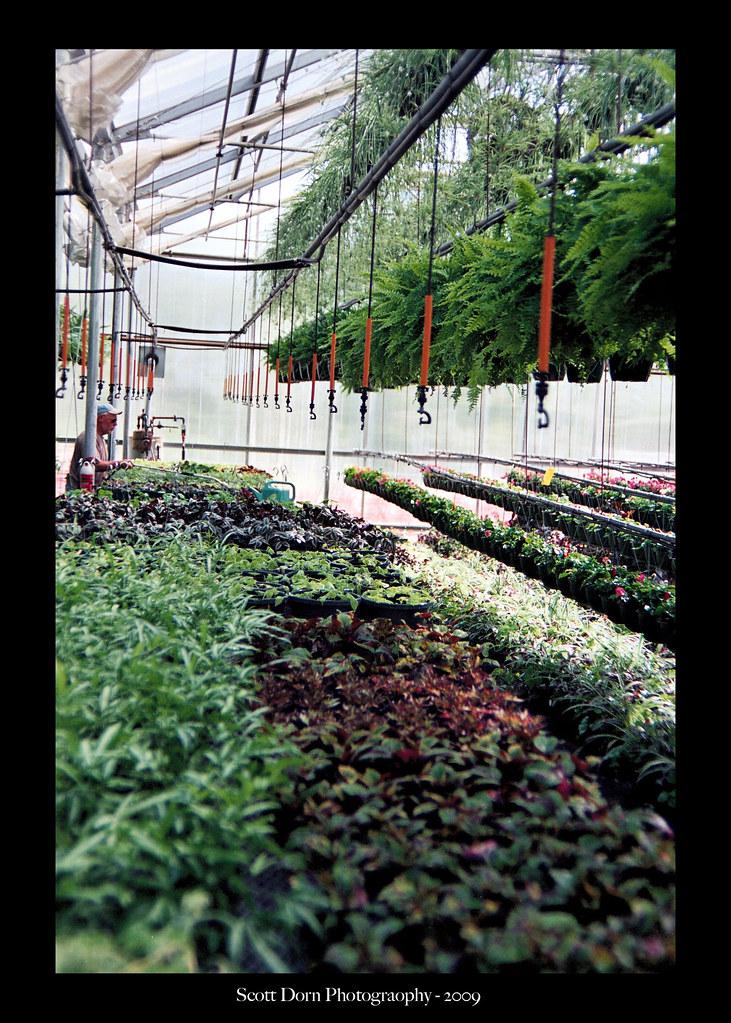 Rosemeade Garden Center Carrollton Ricoh XR M | Lots Of Plan ...